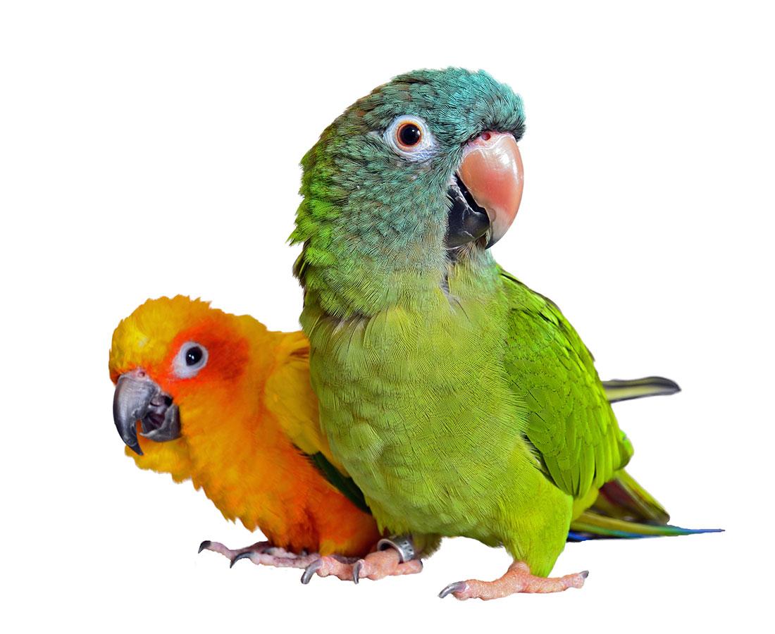 productos clinica veterinaria